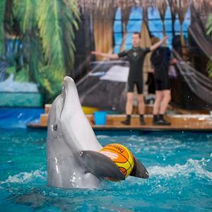Дельфинарии, океанариумы Семилук