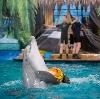 Дельфинарии, океанариумы в Семилуках
